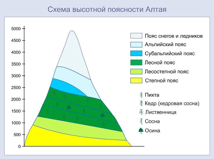 Высотная поясность Алтая.