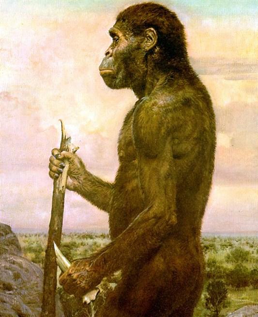 Картинки предшественники человека