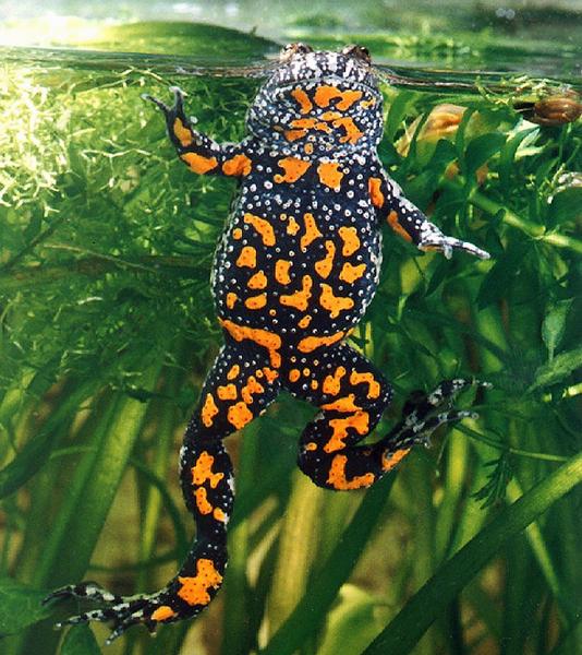 Re: базовое руководство по содержанию наземных жаб (bufo, anaxyrus, spea и др)