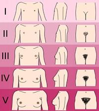 Треугольник на лобке у девушки, порно фото армейских женщин