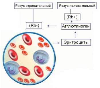 Для этого понадобится знать группу крови свою и донора и совместимы ли они (для проверки нужны шприцы и тест группы